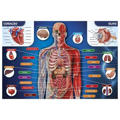 Um quebra-cabeça para você conhecer um pouco mais sobre a anatomia humana! Ele traz uma imagem do corpo humano ilustrando os órgãos, como coração, rin